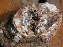 раковины Стоковая Фотография RF