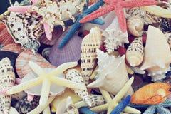 раковины Стоковое Изображение