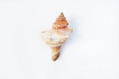 раковины Стоковое фото RF