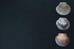 Раковины Scallop на плите шифера Стоковая Фотография RF