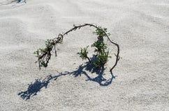 Раковины, Scallops, Nerite, конус на пляже Стоковые Фото