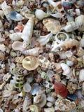 Раковины Sheels всех цветов и размеров Стоковое Изображение