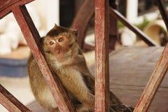 рак есть macaque Таиланд Стоковые Изображения