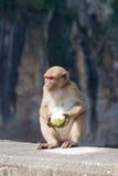 рак есть macaque Стоковое Фото