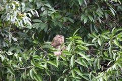 рак есть macaque Стоковая Фотография RF
