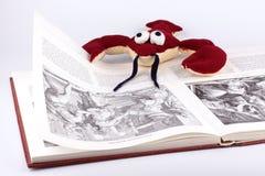 рак книги ухищренный читает Стоковая Фотография RF