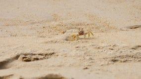 Рак на песчаном пляже акции видеоматериалы