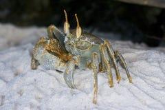 Рак на пляже Стоковые Фото