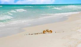рак пляжа тропический Стоковое Изображение