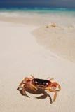 рак пляжа Стоковое Изображение