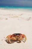 рак пляжа Стоковая Фотография RF