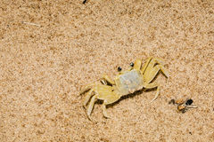 Рак призрака смешивая внутри на пляже Стоковое фото RF