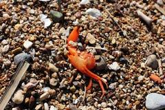 рак пляжа мертвый стоковое фото