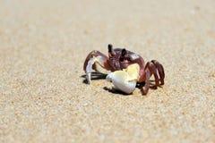 рак пляжа Стоковые Фотографии RF