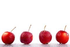 рак яблок Стоковое Изображение RF