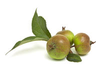 рак яблок Стоковая Фотография