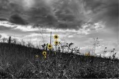 драматические цветки стоковые изображения