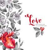 Рамка акварели вертикальная, анатомическое сердце с эскизами роз и листья в винтажном средневековом стиле красный цвет поднял Стоковое Фото