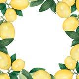 Рамка акварели ветвей с желтыми лимонами и зелеными листьями иллюстрация венка акварели для поздравительной открытки с местом для иллюстрация штока