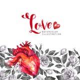 Рамка акварели горизонтальная, анатомическое сердце с эскизами роз и листья в винтажном средневековом стиле красный цвет поднял Стоковая Фотография