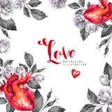 Рамка акварели квадратная, анатомические сердца с эскизами роз и листья в винтажном средневековом стиле красный цвет поднял Стоковое Фото
