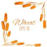 Рамка акварели пшеницы изолированная на белой предпосылке бесплатная иллюстрация