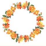 Рамка акварели круглая с желтыми розами Стоковое Изображение RF