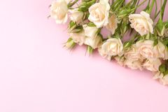 Рамка бежевых красивых мини роз на яркой розовой предпосылке prazniki установьте текст стоковое изображение rf