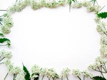 Рамка белых цветов на белой предпосылке стоковое фото