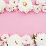 Рамка белых роз на розовой предпосылке Плоское положение, взгляд сверху playnig света цветка предпосылки Стоковая Фотография RF