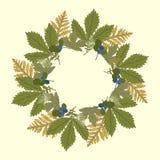 Рамка вектора круглая с листьями и голубиками Стоковое Фото
