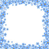 Рамка вектора с голубыми цветками незабудки Стоковое Изображение