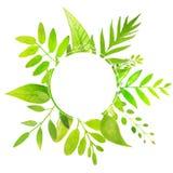 Рамка весны и лета круглая с яркое ым-зелен Стоковое Изображение