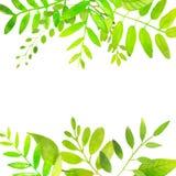 Рамка весны с яркими ыми-зелен листьями вектор Стоковая Фотография