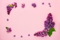 Рамка ветвей и цветки сирени на розовой предпосылке Пробел для карт на лето, свадьба, День матери, женщины стоковое изображение rf