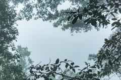 Рамка ветви в утре с густым туманом Стоковые Изображения RF