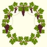 Рамка виноградины Стоковые Изображения RF