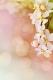 Рамка вишни Стоковое Фото