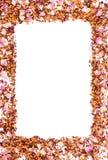 Рамка высушенных одичалых лепестков розы и зерен чая на белой предпосылке, космосе экземпляра для текста Стоковые Фотографии RF