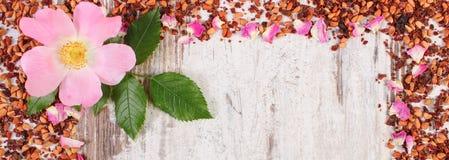 Рамка высушенных одичалых лепестков розы, свежего цветка и зерен чая, космоса экземпляра для текста Стоковые Изображения RF