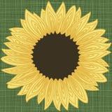 Рамка границы предпосылки с контуром лепестков солнцецвета иллюстрация вектора