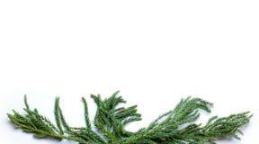 Рамка границы рождества ветви ели на белой изолированной предпосылке Стоковое Изображение RF