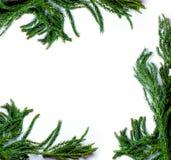 Рамка границы рождества ветви ели на белой изолированной предпосылке Стоковое Фото