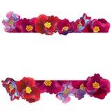 Рамка границы фантастических цветков с пинком и красными тенями лепестков, голубых и фиолетовых, иллюстрация штока