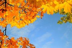 рамка дня города выходит солнце парка клена Стоковое Изображение RF