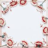 Рамка довольно красных белых цветков на пустой белой предпосылке доски, взгляд сверху Стоковая Фотография RF