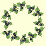 Рамка ежевики с зелеными листьями иллюстрация штока