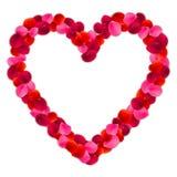 Рамка лепестков розы Стоковое Изображение RF