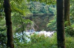 Рамка деревьев Стоковые Фото