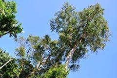 рамка естественная Стоковая Фотография RF